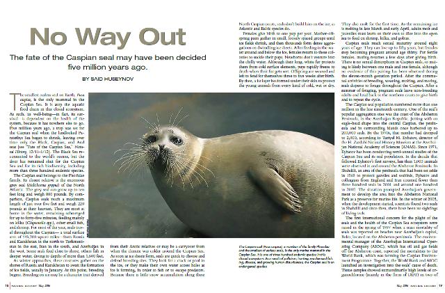 Журнал «Natural History» (США) пишет об опасности исчезновения каспийского тюленя
